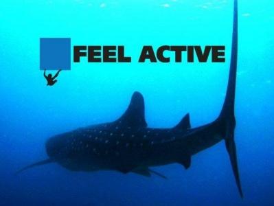 Nurkowanie Feel Active