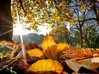 Poleska Złota Jesień  nad Jeziorem Białym w Okunince