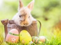 Święta Wielkanocne w Hotelu Orle