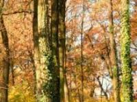 Jesienna odnowa